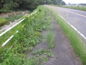 雑草が生い茂る歩道
